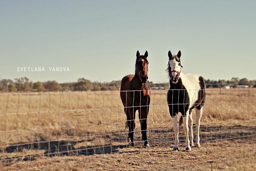 Littlefield, Texas, horses