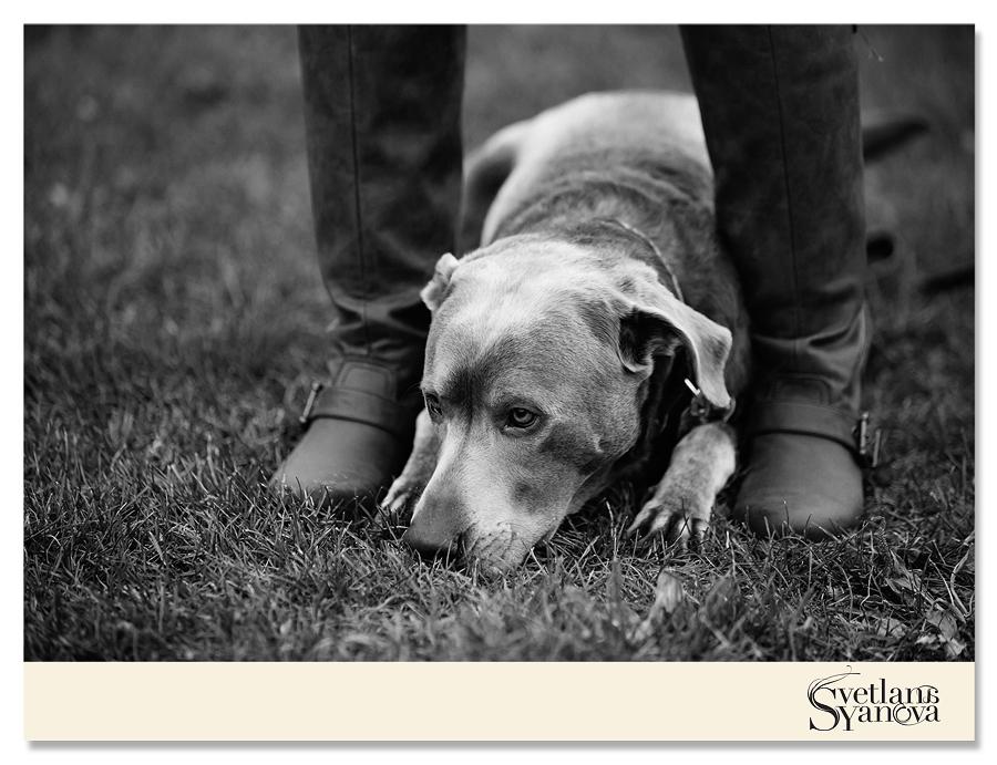 calgary pet photos, calgary portrait photos, calgary photographers, fun pet photos calgary
